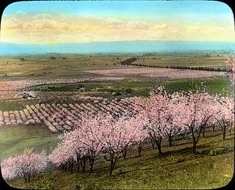 "Santa Clara Valley - ""Valley of the Heart's Delight"", mid 20th century"