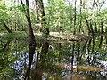 Psilskyi Landscape Reserve (05.05.19) 18.jpg