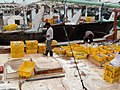 Qatar, Al Khor (14), harbour, inspecting the catch.JPG