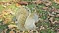 Quelle chance de trouver des noix sous les feuilles. Thanks god for the nuts under the leaves... - panoramio.jpg