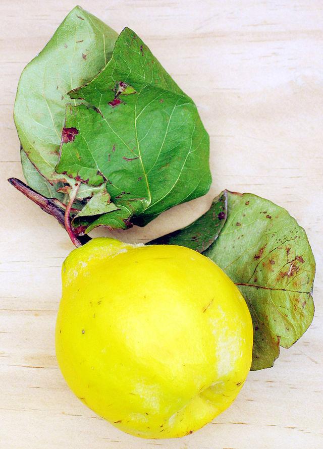 cognassier fruit