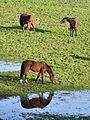 Rüti - Weid 2010-11-14 15-22-36.JPG