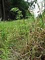 Rašelinná louka u Proseče-Obořiště 13.jpg