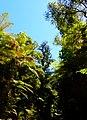 Rain forest near Monroe Beach - panoramio (1).jpg