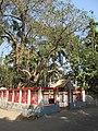Raksha Kalitala - Baduria - North 24 Parganas 2012-02-24 2354.JPG