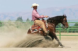 Reining - A competitor performing the sliding stop, one of the signature moves of a reining horse