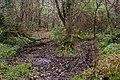 Rea's Wood, Antrim (3) - geograph.org.uk - 614995.jpg