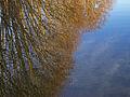 Reflections (3032076945).jpg