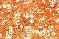 Restes de coquillages et d'algues sur un voile de quille (3).JPG
