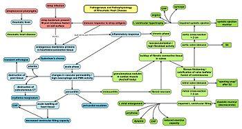 Pathophysiology map of rheumatic fever and rheumatic heart disease