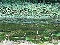 River Lathkill - geograph.org.uk - 1455682.jpg