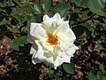 Rosa Polarstern 2018-07-10 5435.jpg