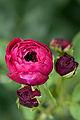 Rose, The Prince3.jpg