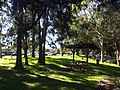 Roselands NSW 2196, Australia - panoramio (3).jpg