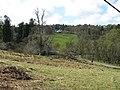 Rough grazing land on a hillside - geograph.org.uk - 1373165.jpg