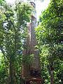 Ruinas de la Hacienda Belvedere, Cabo Rojo, PR.jpg