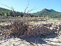 Runes al fondo del Pantà d'Arenós - 42.jpeg