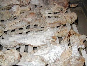 Ethnic cleansing - Rwandan Genocide Murambi bodies