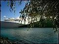 Sauce En El Lago - panoramio.jpg