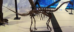 Sauropoda - Cast of Toni, a juvenile diplodocid