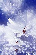 Schneekristalle.jpg