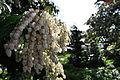 Seattle - Parsons Gardens 24.jpg