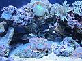 Seattle Aquarium, exhibit.JPG