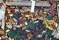 Sempervivum marmoreum (Sempervivum erythraeum) - Botanischer Garten Braunschweig - Braunschweig, Germany - DSC04371.JPG