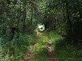 Sentier de grande randonnée à Saint-Alban-en-Montagne.jpg