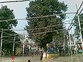 Shah Ali Mazar Mirpur 011.jpg