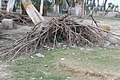 Shahbazpur Meghna Tourist Spot, Tulatuli, Bhola (27).jpg