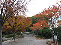 Showazan2.jpg