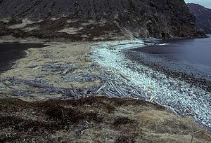 Nagai Island - Shumagin Islands, Nagai Island, 1985