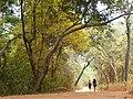 Sigiriya Sanctuary.jpg