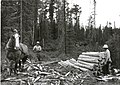 Skidding pump wood with horse on Halfway RD, 7 15 1960 (5188042576).jpg