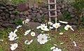 Small-garden-Nandal-Iran.JPG