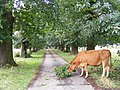 Snacking on a Tree - geograph.org.uk - 533321.jpg