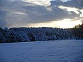 Snow, november 2010 030 (6538159383).jpg