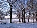 Snowy trees - panoramio.jpg