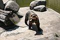 Sofia Zoo E93.jpg