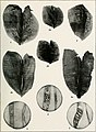 South American Naiades - a contribution to the knowledge of the freshwater mussels of South America (1921) (14592227108).jpg