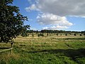 South Common - geograph.org.uk - 54273.jpg