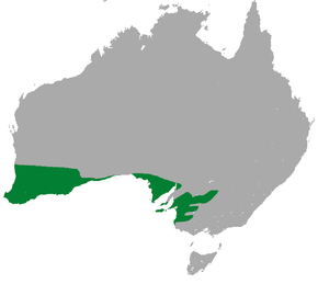 Description de l'image Southwestern Pygmy Possum area.png.