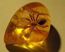 Spider in amber (1)