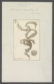 Spongia cannabina - - Print - Iconographia Zoologica - Special Collections University of Amsterdam - UBAINV0274 112 05 0022.tif