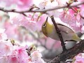Spring Time (24945894873).jpg