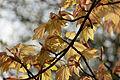 Spring in Epsom (7126275051).jpg