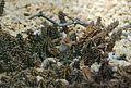 Stapelianthus decaryi 07 04 Philweb.jpg