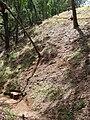 Starr 080526-4561 Eucalyptus robusta.jpg