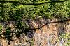 Steinbruchloch Nirwana, Königshainer Berge-9616.jpg